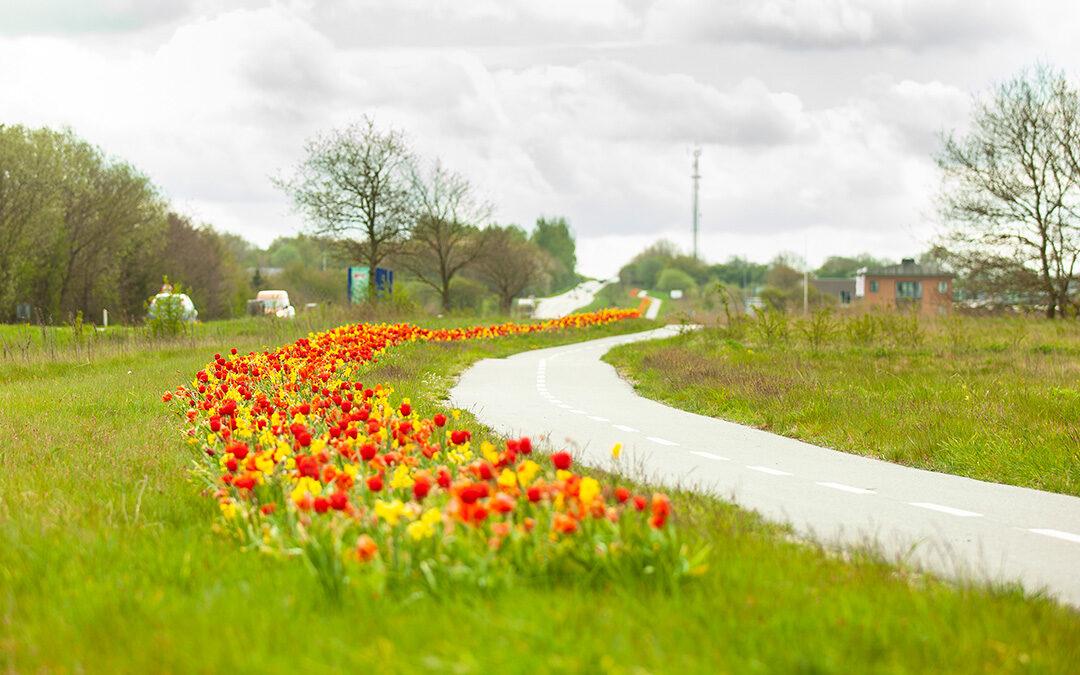 Blomster i lange baner i Padborg