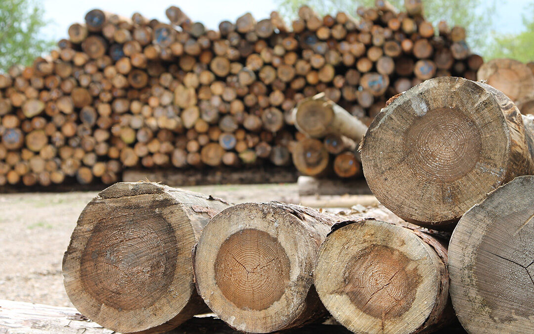 Timber & Forestry etablerer sig i Aabenraa Industrihavn